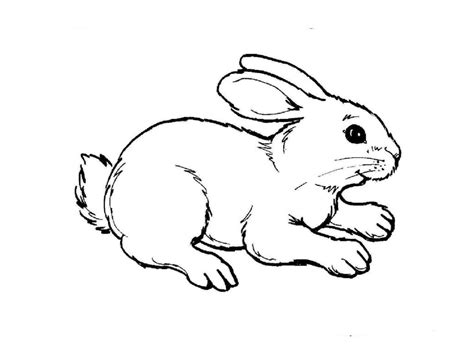 coloring pages pets animals coloring pages animals gianfreda net coloring pages pet