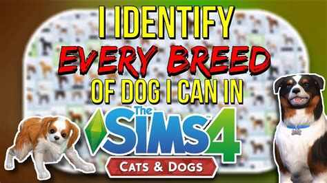 can cats and dogs mate i identify every breed of i can in the sims 4 cats and dogs funnycat tv