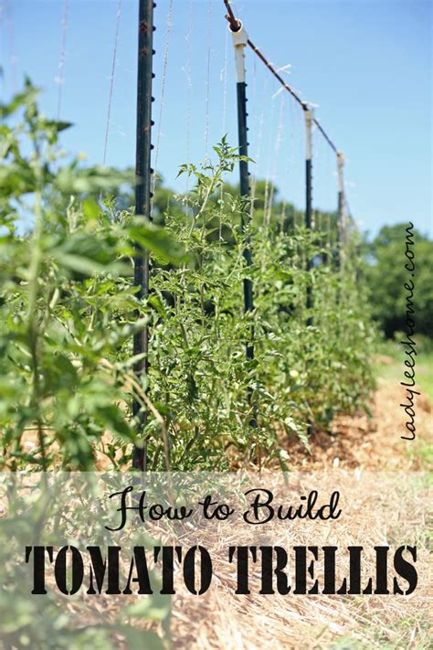 Building A Tomato Trellis the 25 best ideas about tomato trellis on tomato support cucumber trellis and