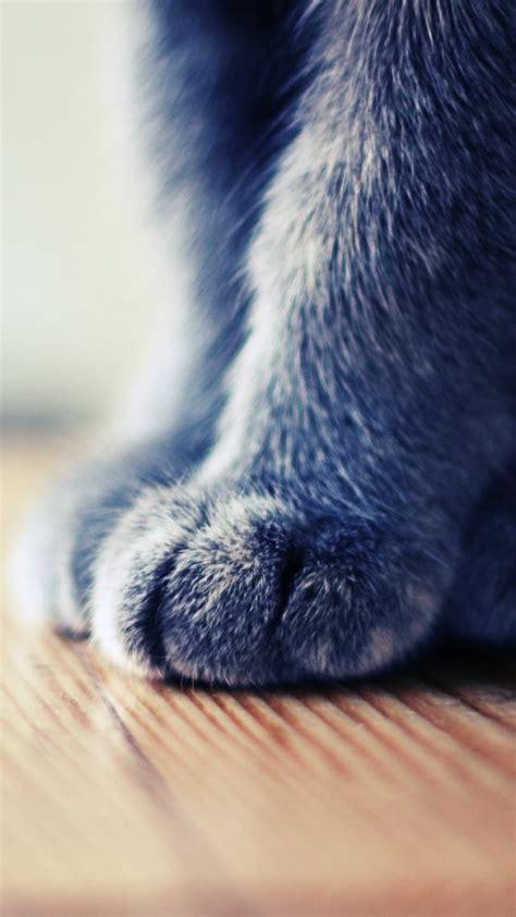 wallpaper cat iphone 6 10 bonitos fondos de pantalla de animales para tu iphone