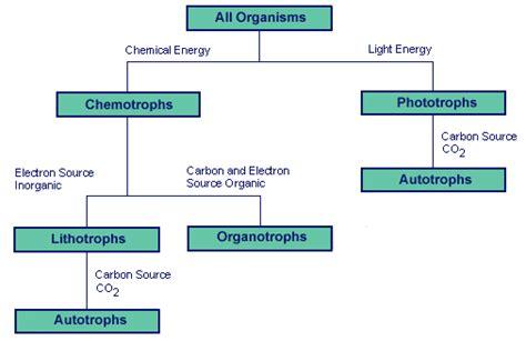 pattern matching organic molecules lab microbiology introduction sigma aldrich