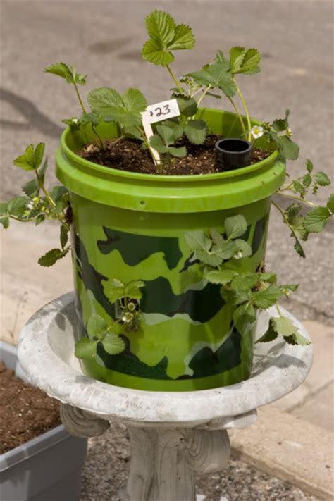 strawberry planter ideas 5 gallon articles and community five gallon ideas