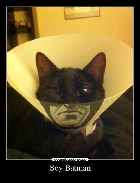 imagenes hipster gatos gatos hipster