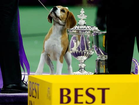 Best In Show At Square Garden by 35 Best Westminster Kennel Club Show Best In Show