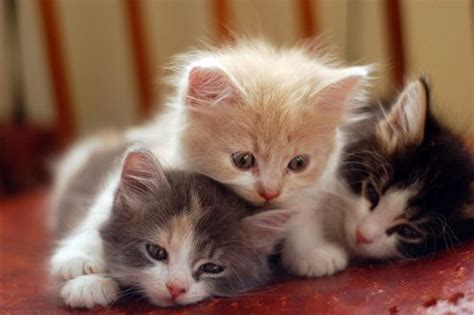 three cute kittens the cat clan