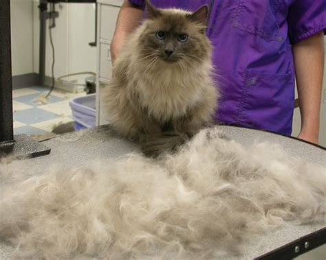 how to remove dog hair from sofa how to remove pet hair from couch furminator purrfurred
