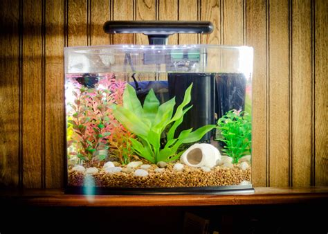 aquarium home decor small fish aquarium ideas aquarium design ideas