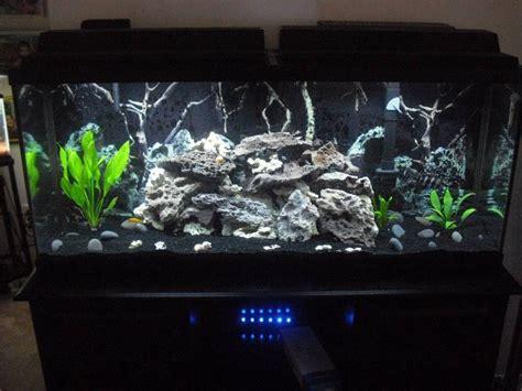 aquarium design with black sand new setup on my 55 gal tang tank my aquarium club