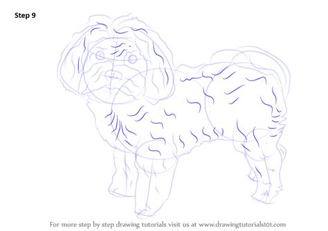 how to draw a shih tzu step by step how to draw a shih tzu puppy breeds picture