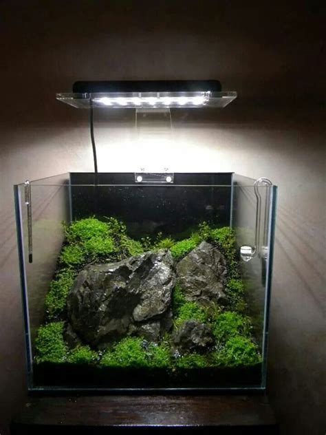 cube aquarium aquascape 111 best cube aquascape ideas images on pinterest fish