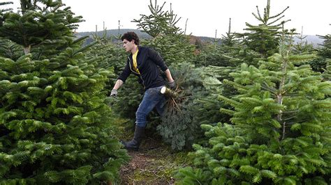 best seattle tree lot best dfw places to cut your tree 171 cbs dallas fort worth