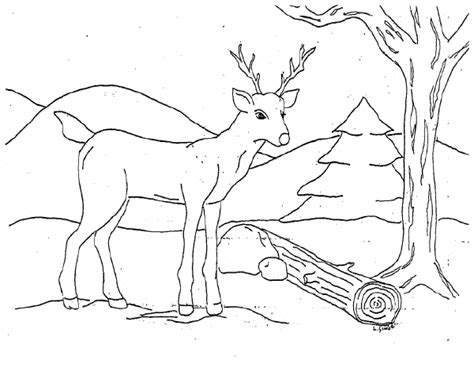 deer coloring pages coloringpages1001 com