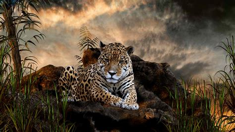 jaguar images hd jaguar jaguar animal jaguar animal facts jaguar the animal