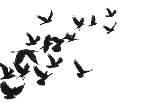 Flying Blackbird Outline by Bird In Flight Silhouette Www Pixshark Images Galleries With A Bite