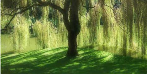 fiori di bach willow fiori di bach willow benessere alimentazione sana
