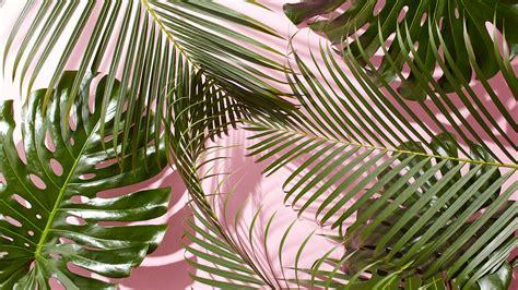tropical wallpaper west elm tropical leaves desktop wallpaper jpg 4800 215 2700