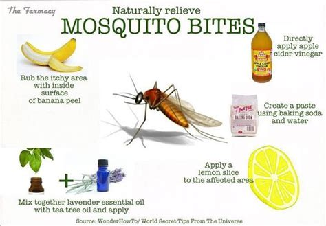 mosquito bite remedies interesting