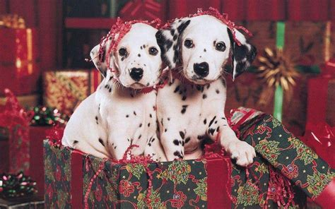 christmas wallpaper with puppies puppy christmas wallpapers wallpaper cave