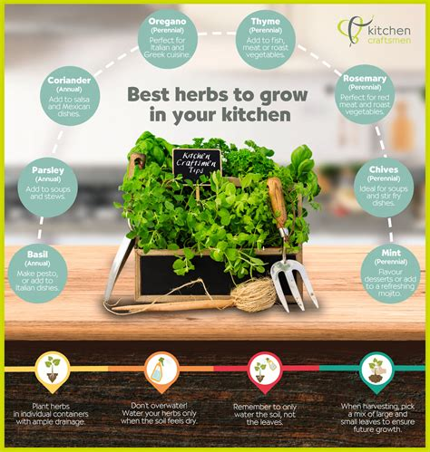 grow herbs in kitchen growing herbs for perth kitchens kitchen craftsmen