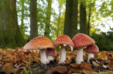 imagenes uñas con hongos c 243 mo reconocer hongos comestibles vix