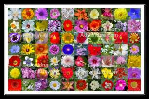 70 flowers collage poster 3 quot x 3 quot photos with the names of each flower