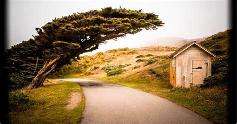 Light Impressions by Light Impressions Wind Swept Monterey Cypress