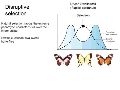 patterns of selection and speciation ppt video online