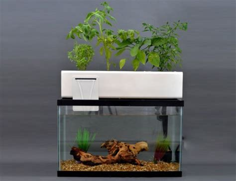andrew de melo s blue green box uses fish waste to provide