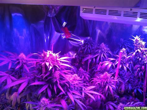 growing with led lights forum mars hydro led grow light discussion page 2