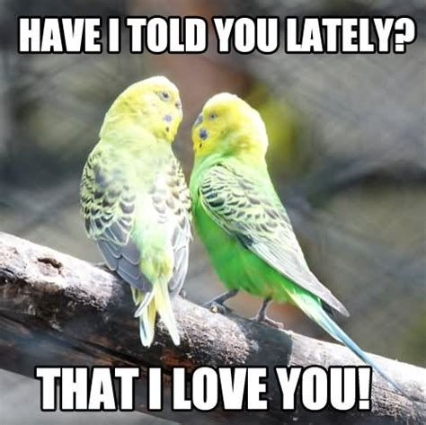 Funny Bird Memes - cute animal i love you meme www imgkid com the image