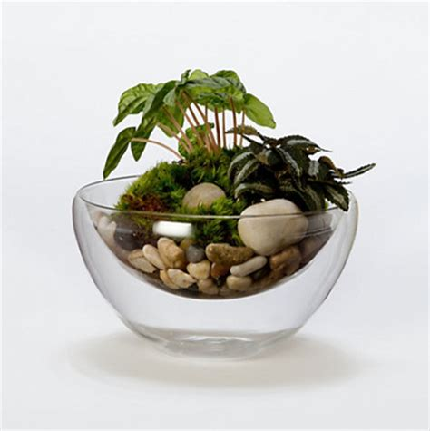 Glass Bowl Planter by Floating Sand Bowl Indoor Pots And Planters By Terrain