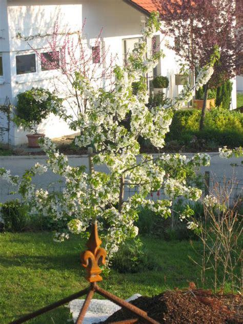 obstbaum kleiner garten obstbaum kleiner garten lyfa info
