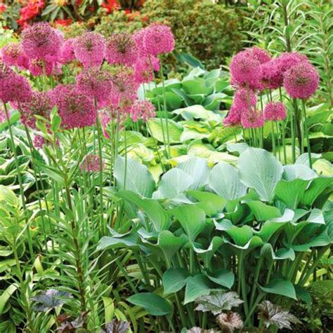12 top midwest perennial flowers midwest living