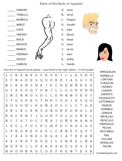 printable body puzzle spanish body parts worksheet wiildcreative