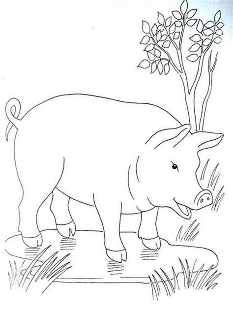Pig Coloring Pages by Free Printable Pig Coloring Pages For