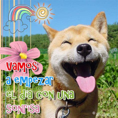 imagenes feliz domingo con animales tarjetas de thanksgiving gratis apexwallpapers com