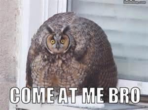 Owl Who Meme - come at me bro
