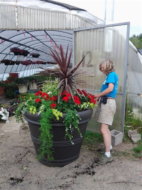 Commercial Flower Planters by Commercial Planter With Cordyline And Geraniums