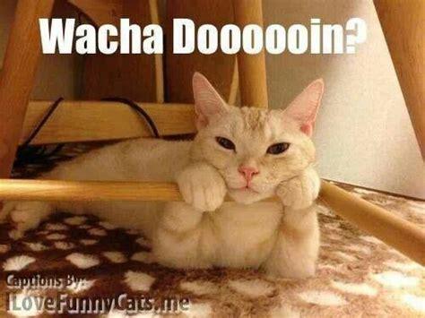 whatcha doin must cats pinterest cats