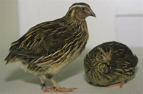 what is coturnix a blog around the clock
