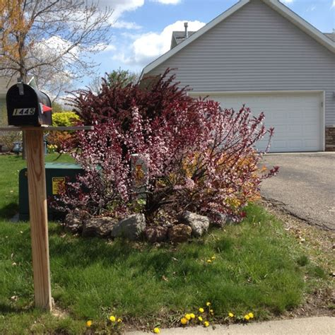 Landscape Ideas To Hide Electrical Box Landscaping Landscaping Ideas To Hide Utility Boxes