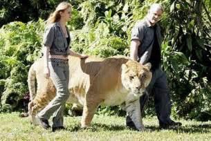 EducationView: World biggest animals ..