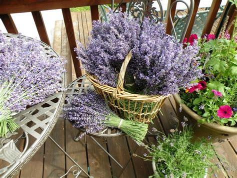 fiori per balconi fiori da balcone le specie pi 249 ed adatte ad essere