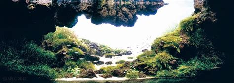 design aquascape karya maestro dunia part  dunia akuarium