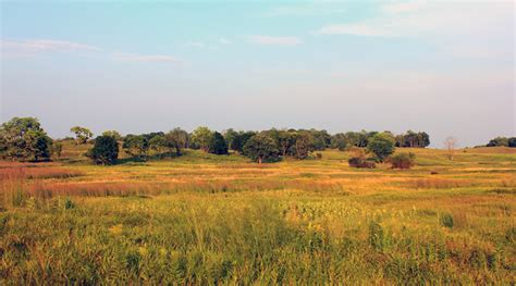 Landscape Rock Prairie Plantings Aim To Put The Prairie Back In Prairie State