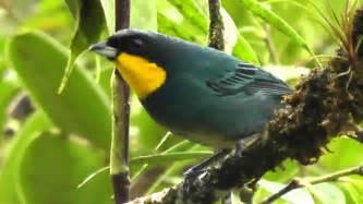 birds of colombia aves reserva natural de las aves las