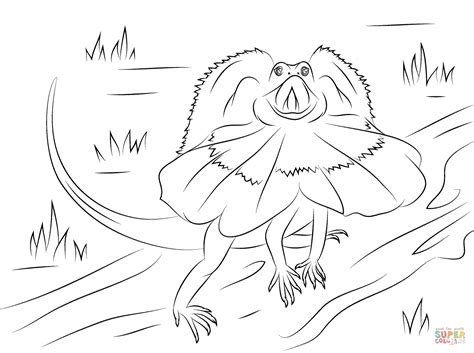 frilled lizard coloring pages frilled dragon lizard coloring page free printable