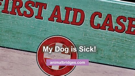 is my puppy sick a testimonial my is sick can animal bridges help