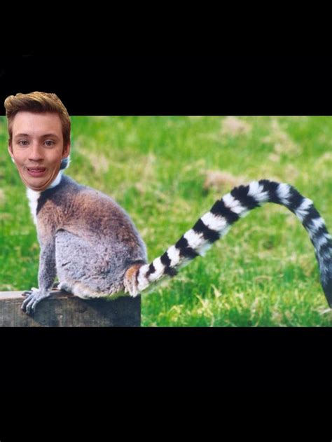 troye lemur sivan   laugh lemur animals