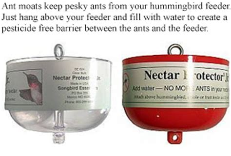 wild birds unlimited ant moats for hummingbird feeders